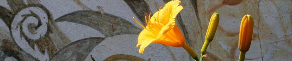 meditazione dei fiori bach